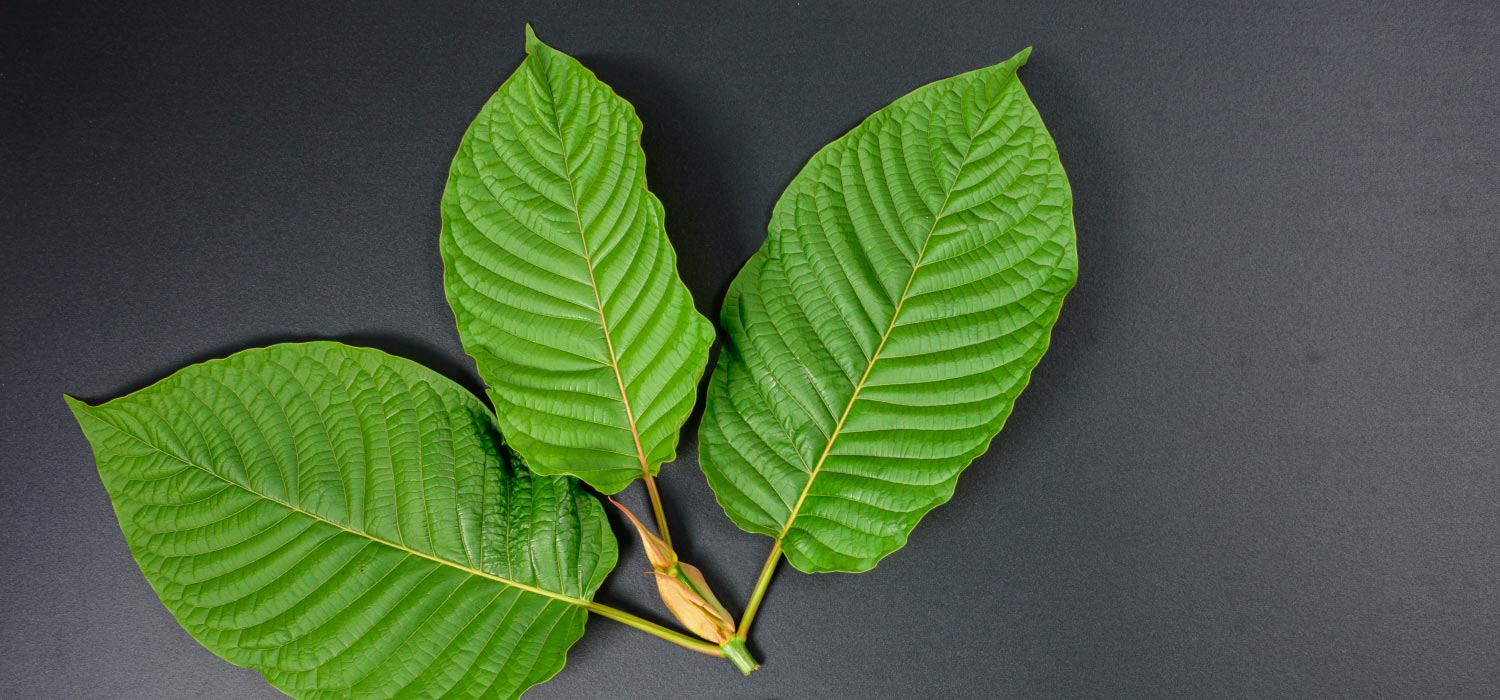Kratom Strains and Names
