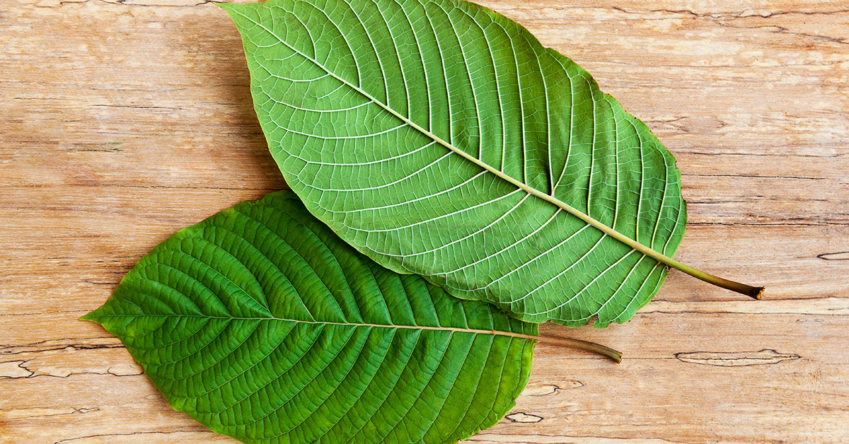 Best Kratom For Energy, kratom for energy and motivation