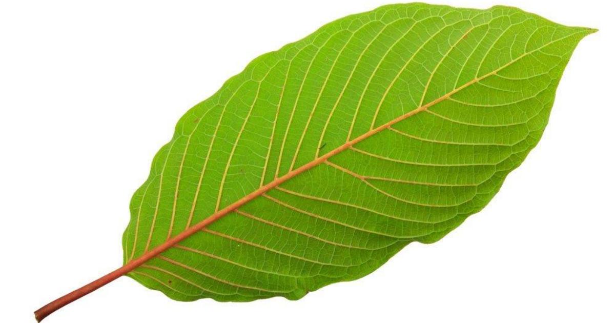 red vein strains
