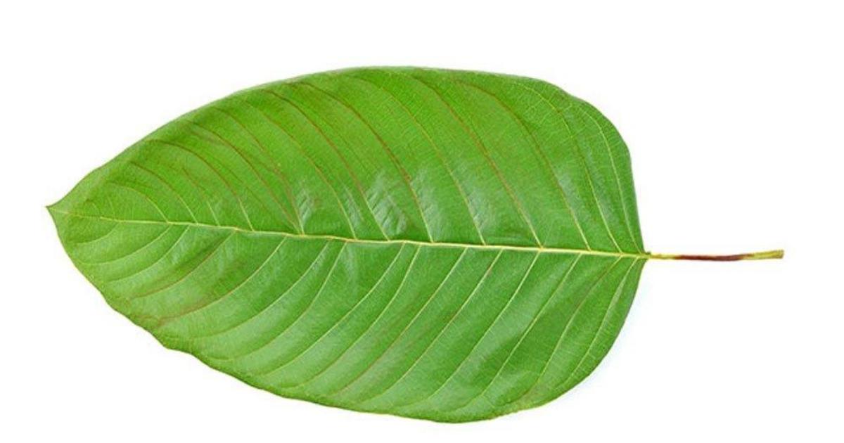 green vein strains